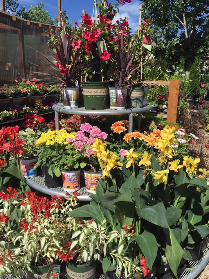 Riverton-utah-garden-nursery-18