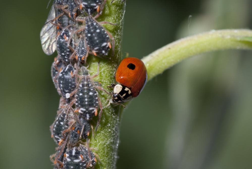 utah-garden-pest-control