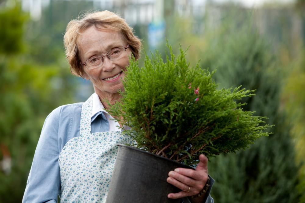 utah-shrub-planting